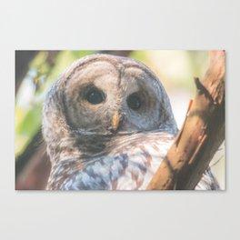 Barred owl portrait Canvas Print