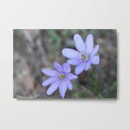 anemones Metal Print