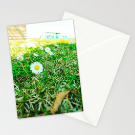 Daisies in Clinch Park - Traverse City, Michigan Stationery Cards