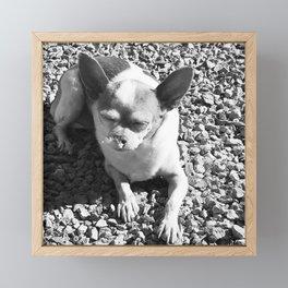 Chi In Bliss Framed Mini Art Print