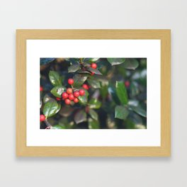 Holly Bush Framed Art Print