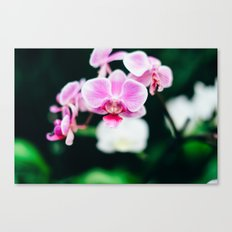 Fuji Color Orchid  at FPC Canvas Print