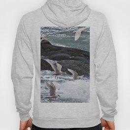 Gulls shop for Dinner Hoody