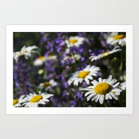 rileigh smirl Art Prints featuring Field of Daisies by Rileigh Smirl