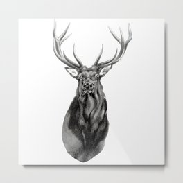 Bull Elk Encounter Metal Print