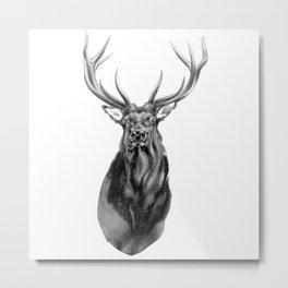 Bull Elk Encounter Metal Print