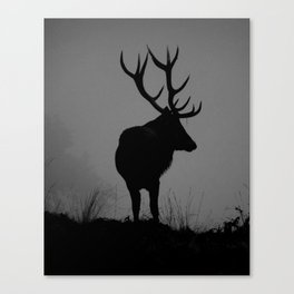 Wildlife, Monarch Of The Park Canvas Print
