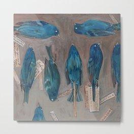Indigo Buntings Bird Specimens Metal Print