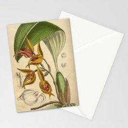 Bulbophyllum sociale, Orchidaceae Stationery Cards