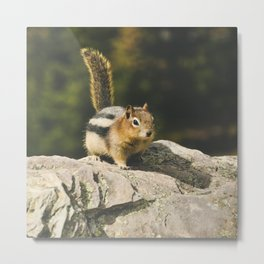 squirrel in the sun Metal Print