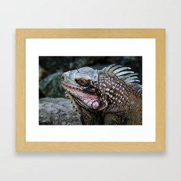 Portrait of an Iguana Framed Art Print