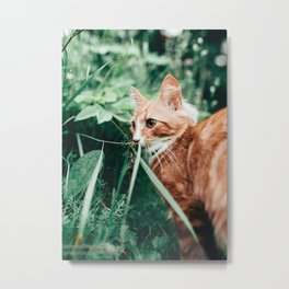 Cat by Emil Widlund Metal Print