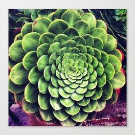 Springtime Succulent  Canvas Print