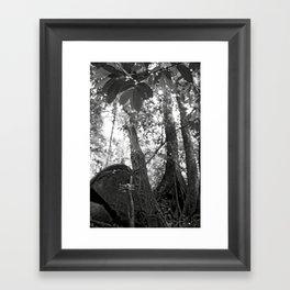 Umbilical Framed Art Print
