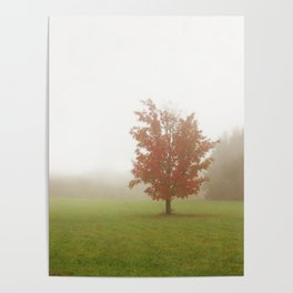 Maple Tree in Fog with Fall Colors Poster