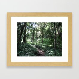 Forest Walks 3 Framed Art Print