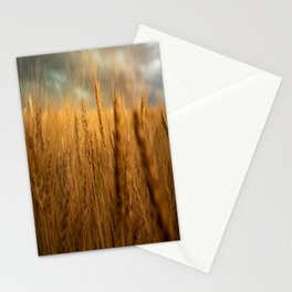 Harvest Time - Golden Wheat in Colorado Field Stationery Cards