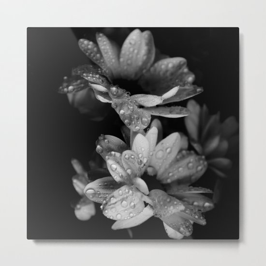 Flower and drops. Black and white. Metal Print