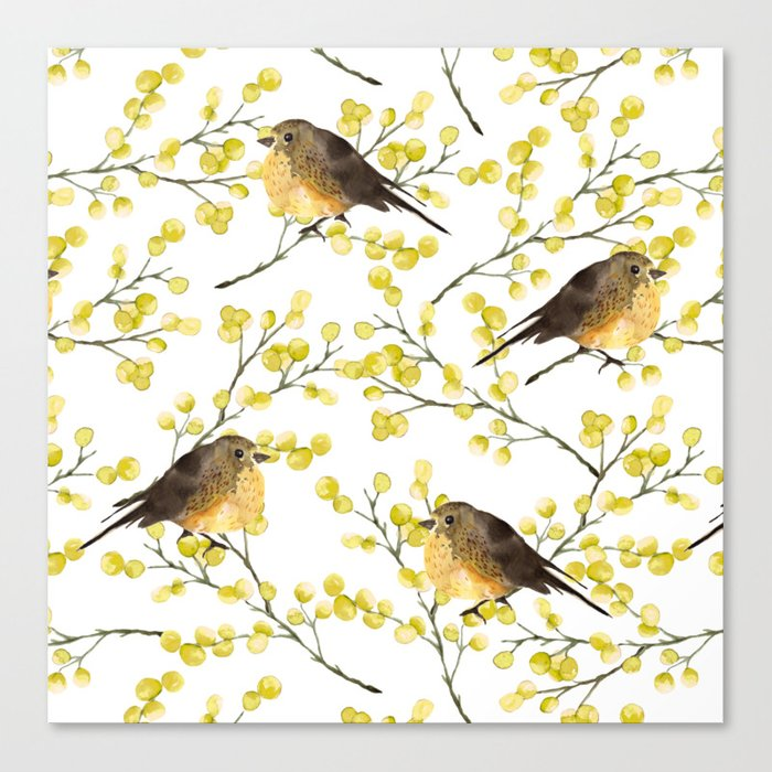 Mimosa and birds Canvas Print