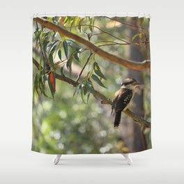 Kookaburra sitting in a gum tree Shower Curtain