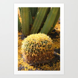 Barrel Cactus Covered In Butter Yellow Palo Brea Blossoms in Portrait Art Print