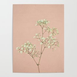 Baby's Breath Poster