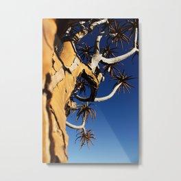 NAMIBIA ... Quiver Tree Metal Print