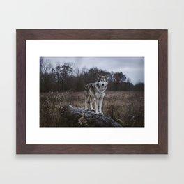 Wolf on Log Framed Art Print