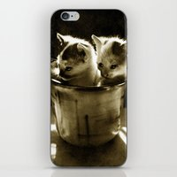 kittens iPhone & iPod Skins featuring Kittens by Northern Light Images