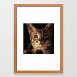 Kitten In The Window Framed Art Print