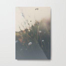 buckwheat ... Metal Print