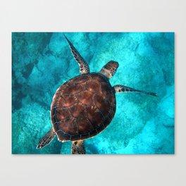 Swimming Turtle Canvas Print