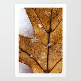 snowflakes on a leaf Art Print
