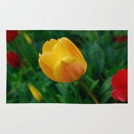 Close-up Of Bright Yellow Tulip Rug