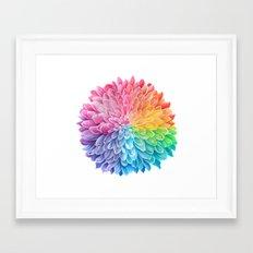 Rainbow Chrysanthemum Framed Art Print