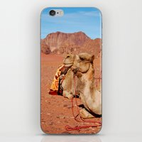 camel iPhone & iPod Skins featuring camel by lularound