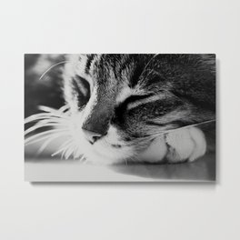 Portrait of a cat in black and white Metal Print
