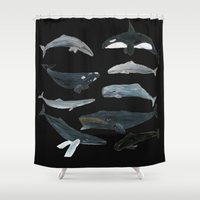 whales Shower Curtains featuring whales by L Step