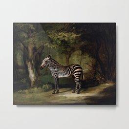 George Stubbs - Zebra Metal Print