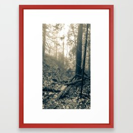 Forest Fog Framed Art Print