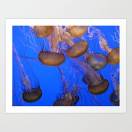 Monterey Bay Jellyfish Art Print