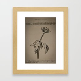 Trollis Larus Framed Art Print