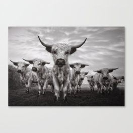 Highland Cattle Mixed Breed Mono Canvas Print