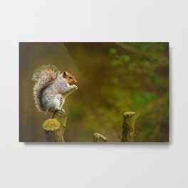 Cute Squirrel (Color) Metal Print