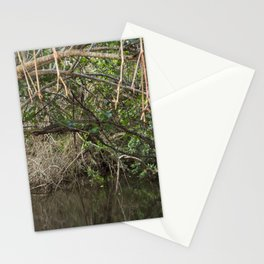 Mangrove the beauty of nature Stationery Cards