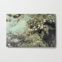 Toadstool Forest No. 2 Metal Print