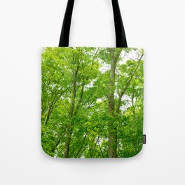 New green leaves of a Japanese zelkova tree Tote Bag