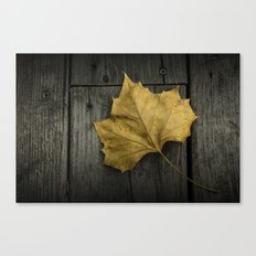 Photograph of a Fallen Sycamore Leaf on a Gray Wooden Deck Canvas Print