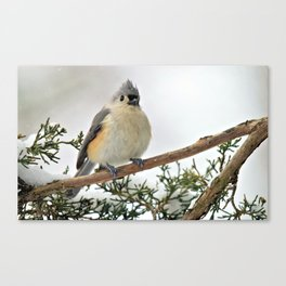 I Am Titmouse. Hear Me Roar! Canvas Print