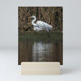 Great and Snowy Egrets, No. 3 Mini Art Print
